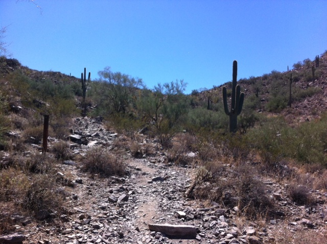 The L.V. Yates Trail 8 is my favorite for a quiet day in the desert.