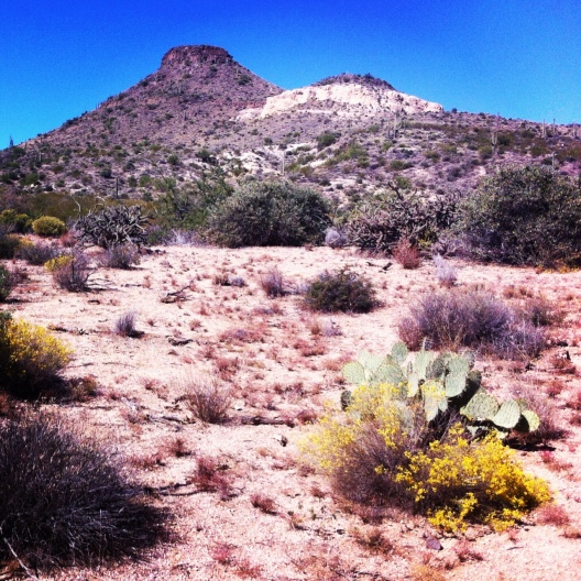 Dear City of Scottsdale, Thanks for this. You've done well. (Brown's Mountain)
