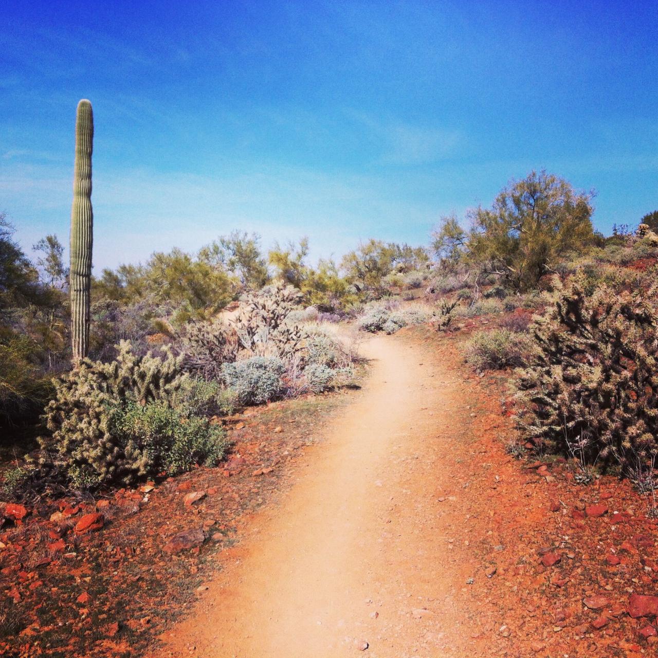 Maternity Hike: Apache Wash Loop in Sonoran Preserve – Lilia Takes ...